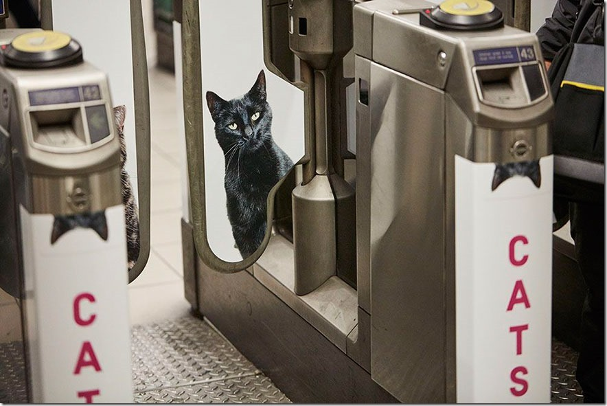 cat-ads-underground-subway-metro-london-3