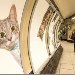 cat-ads-underground-subway-metro-london-6_thumb.jpg