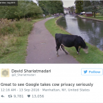 google-blurred-cow-face-privacy-1.png