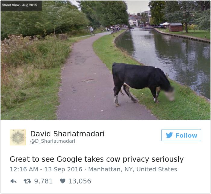 「googleはクレイジーだ…」ストリートビューが動物のプライバシーに配慮し、ぼかしを入れる処理を実行
