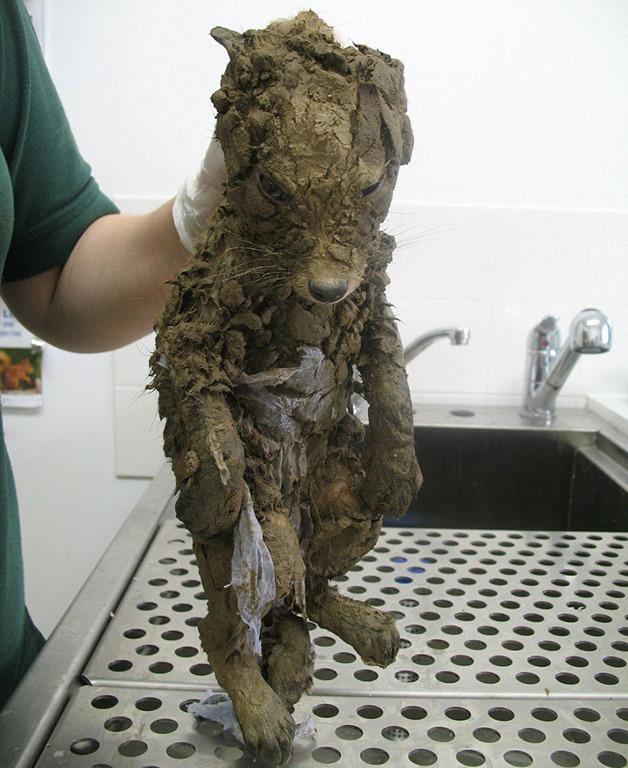 泥の中から一匹の奇妙な生き物が救助される。洗ってわかった意外な正体とは…?