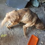 woman-finds-dog-broken-spine-greece-5.jpg