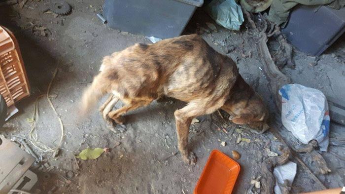 ギリシャで見つけた背骨の折れた犬! オランダ人女性がとった心温まる行動とは・・・