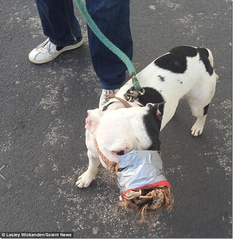 「ガムテープでぐるぐる巻きにされた犬」が悲惨すぎると大炎上。動物虐待の声が相次ぐ