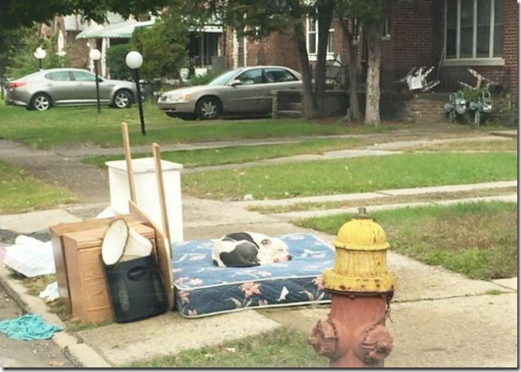 粗大ごみとして捨てられたワンちゃん、飼い主を待ち続ける健気な姿に周辺住民が動いて…【感動ストーリー】