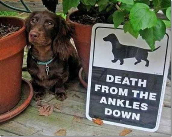 「猛犬注意」この奥から出てきたものの正体とは…。海外「これはある意味注意かもしれない」