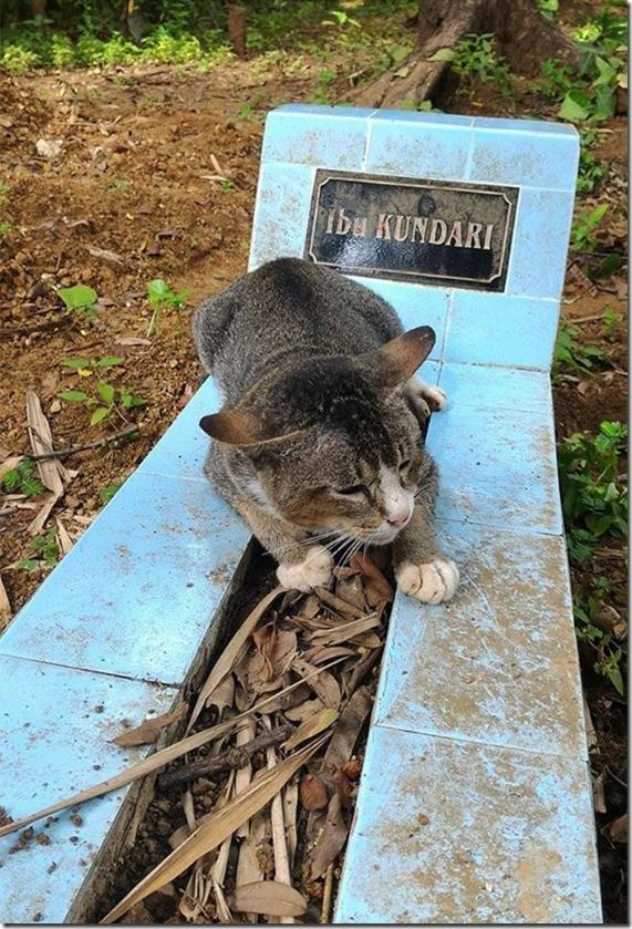 死んだ飼い主の墓の上に座り続けるニャンコ、1年経っても一途。猫に忠誠心がないとか言うやつw