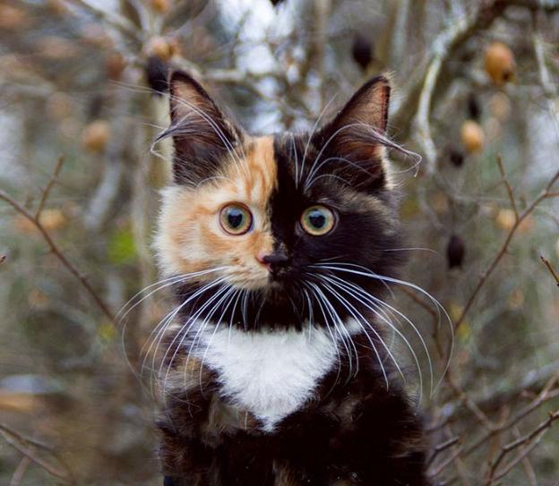 """チャームポイントは""""二面性""""!インスタフォロワー1万6千人のキメラ猫!"""