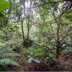 【画像あり】ジャングルの中に隠れた12人の特殊部隊。これわかる奴いるのか?