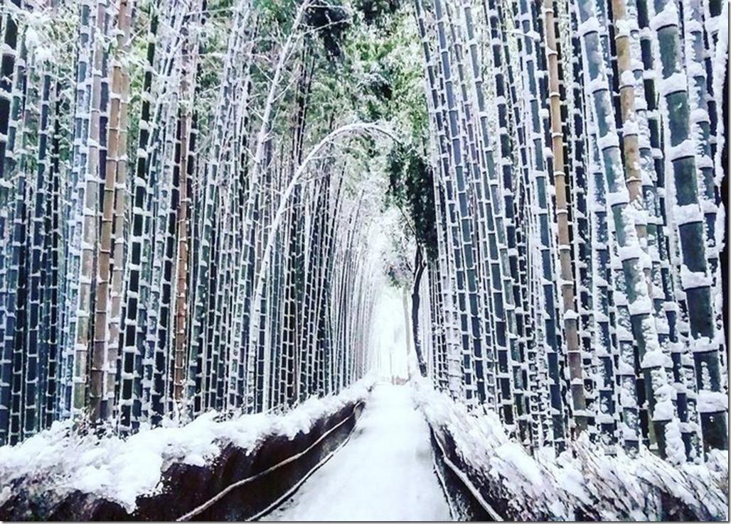 heavy-snowfall-kyoto-japan-2017-21-587dcc6226a2b__700