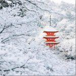 「日本には隠れ忍者がいるの!?」親日外国人が選ぶ京都のベストショット10選!