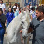 「動物にも感情はある」飼い主の葬儀で愛馬がとった行動に世界が泣いた…