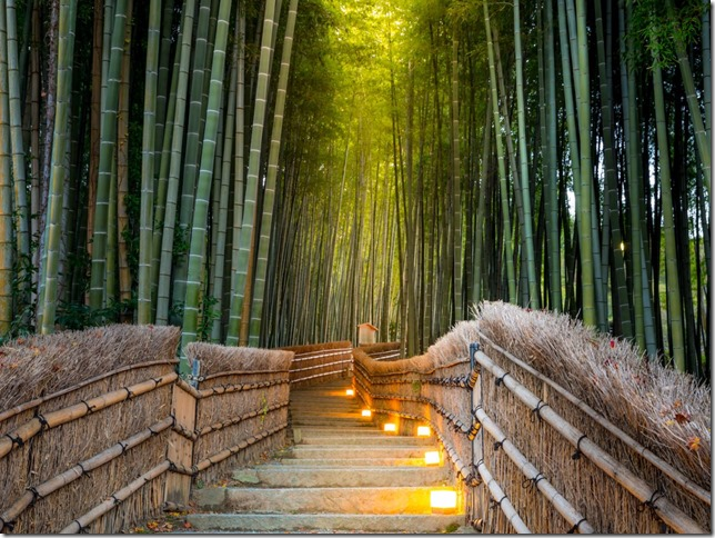 host-to-endless-instagrams-the-immense-bamboo-grove-in-kyotos-arashiyama-district-is-one-of-the-citys-most-celebrated-staples