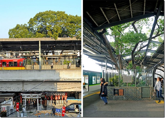 train-station-700-year-old-tree-kayashima-japan-1