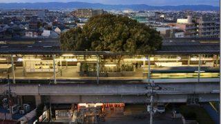 【700年ぶりだねぇ…】日本のぶっ飛んだ駅に外国人が驚愕「トトロが出てきそうw」