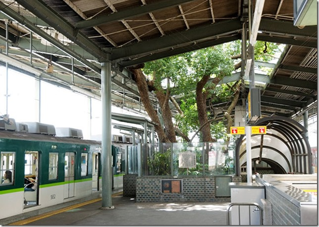 train-station-700-year-old-tree-kayashima-japan-5