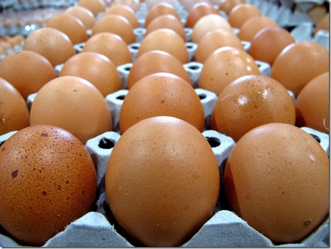 however-she-prefers-brown-eggs
