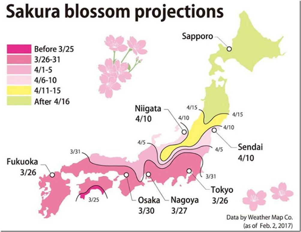 kawazu-cherry-blossoms-shizuoka-japan-12