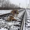 大怪我を負い線路上に立ち往生する犬、そこに助けに現れた勇敢な「友達」とは?!
